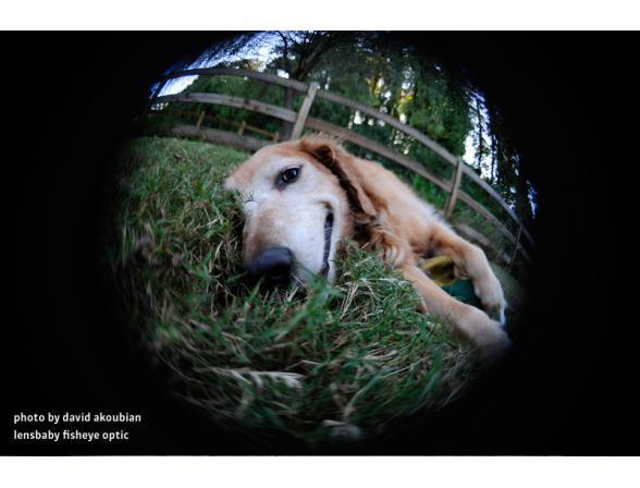 Объектив Lensbaby Scout with Fisheye for Canon